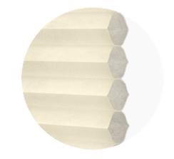 single cell translucent